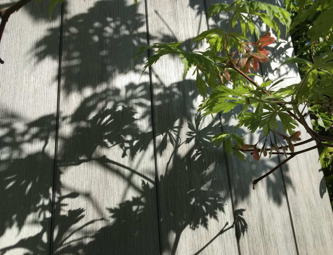A plant from the garden casts shadows on wooden decking