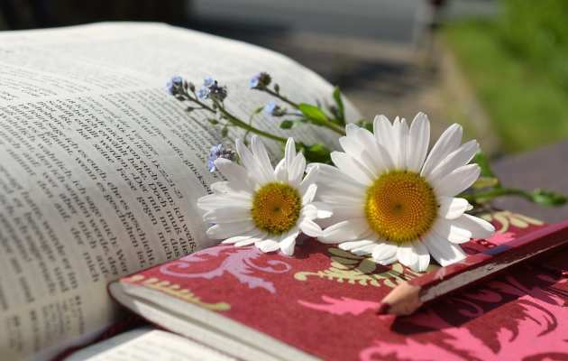 daisies on book