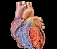 Technical image of a heart