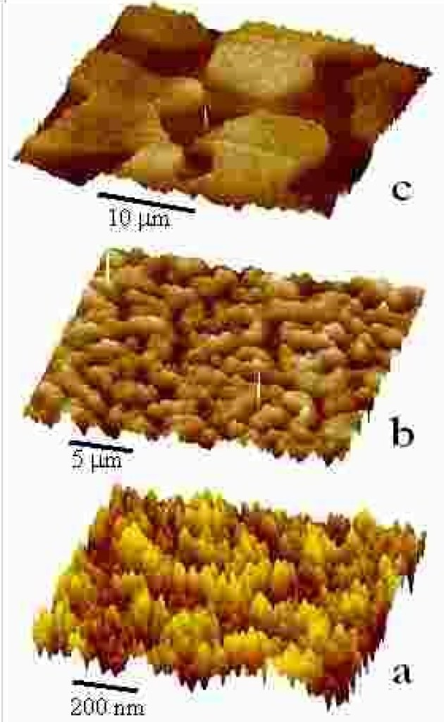 AFM topography of phase separated TMPC/PS blends