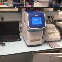 pplied Biosystems StepOnePlus Real-Time PCR System (RT-PCR)
