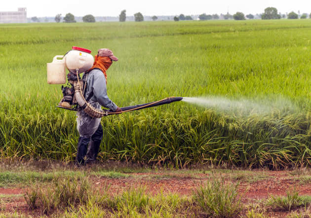Man in a field spraying pesticides on the crop