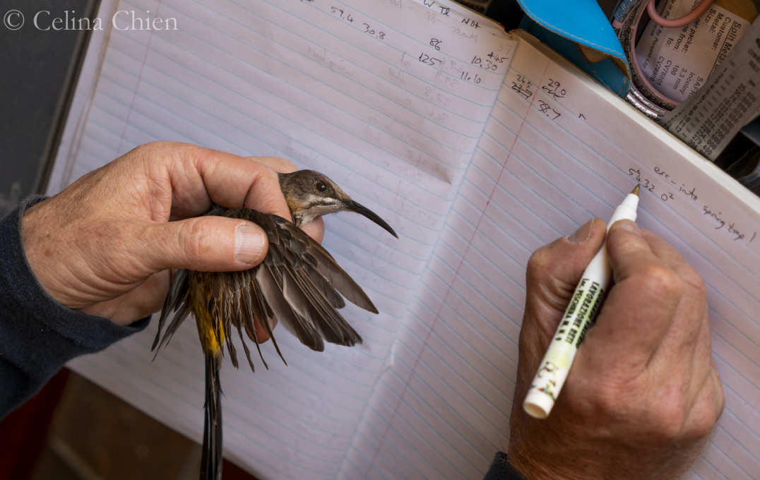Someone holding a bird while writing in a notebook
