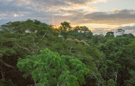 Image of Rainforest for carbon Offsetting