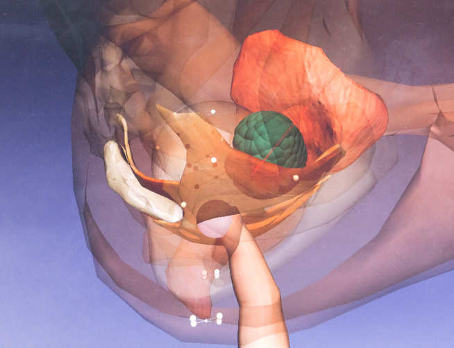 Screenshot from the rectal examination trainer showing patient anatomy and user's finger screenshot