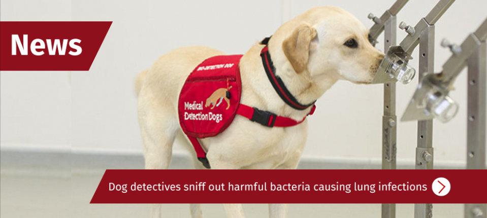 CF sniffer dogs