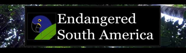 Endangered South America