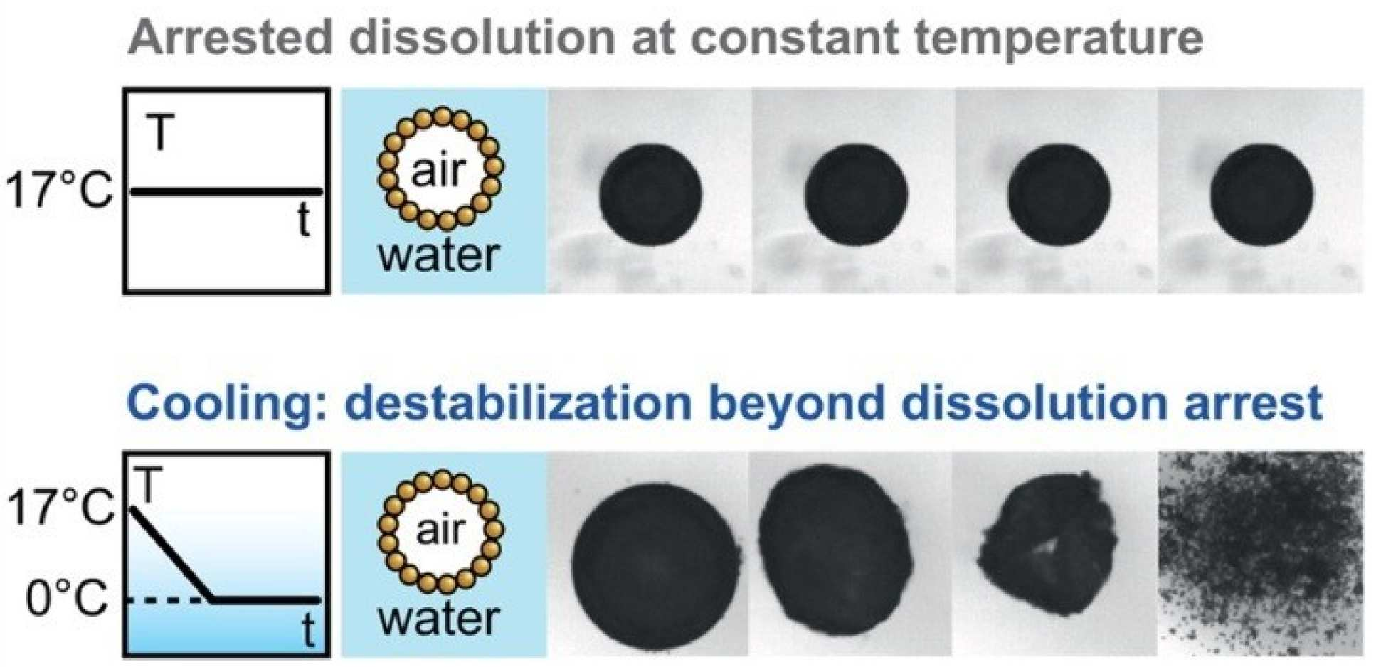 V. Poulichet,  V. Garbin, Cooling particle-coated bubbles: destabilization beyond dissolution arrest, Langmuir 31, 12035 (2015).