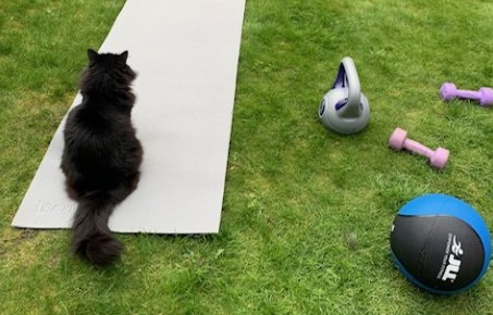 Cat on an exercise mat in the garden