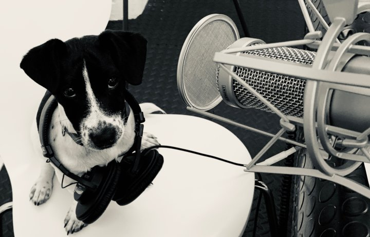 Puppy sitting next to microphone in a recording studio, with headphones round his neck