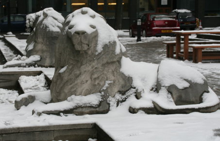 Lions on campus in the snow
