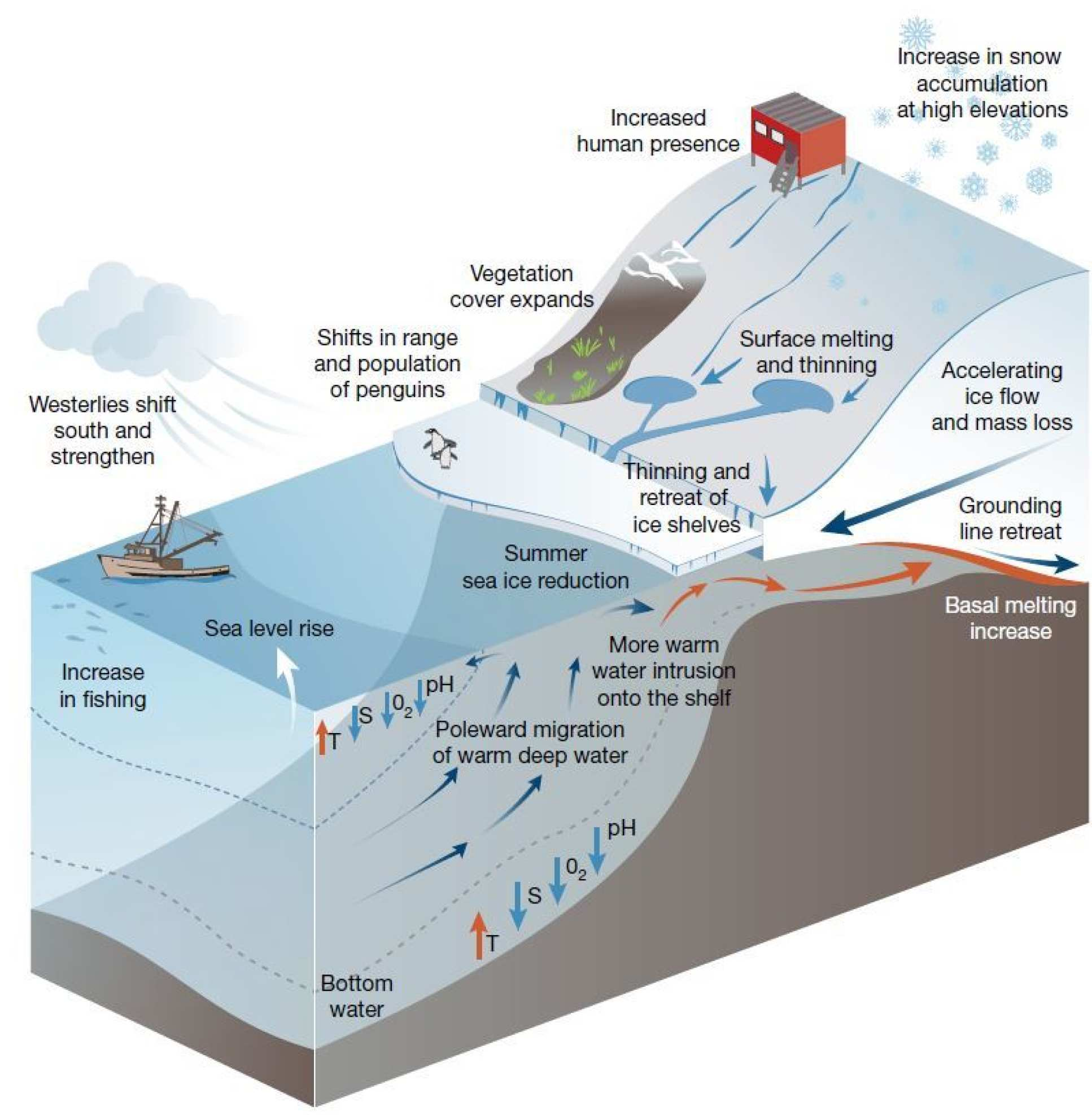Diagram summarising the impacts on Antarctica
