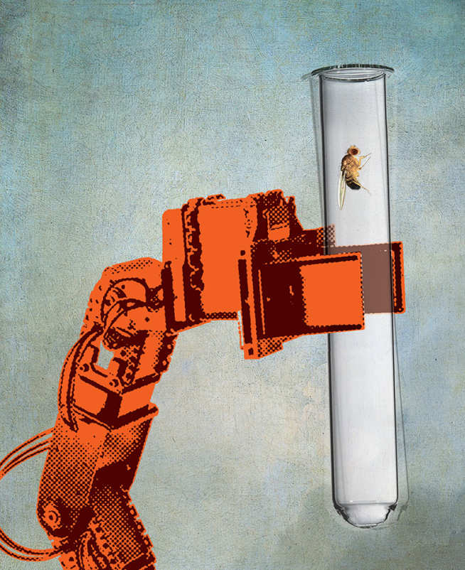 An illustration of a fruit fly in a test tube held by a robotic arm