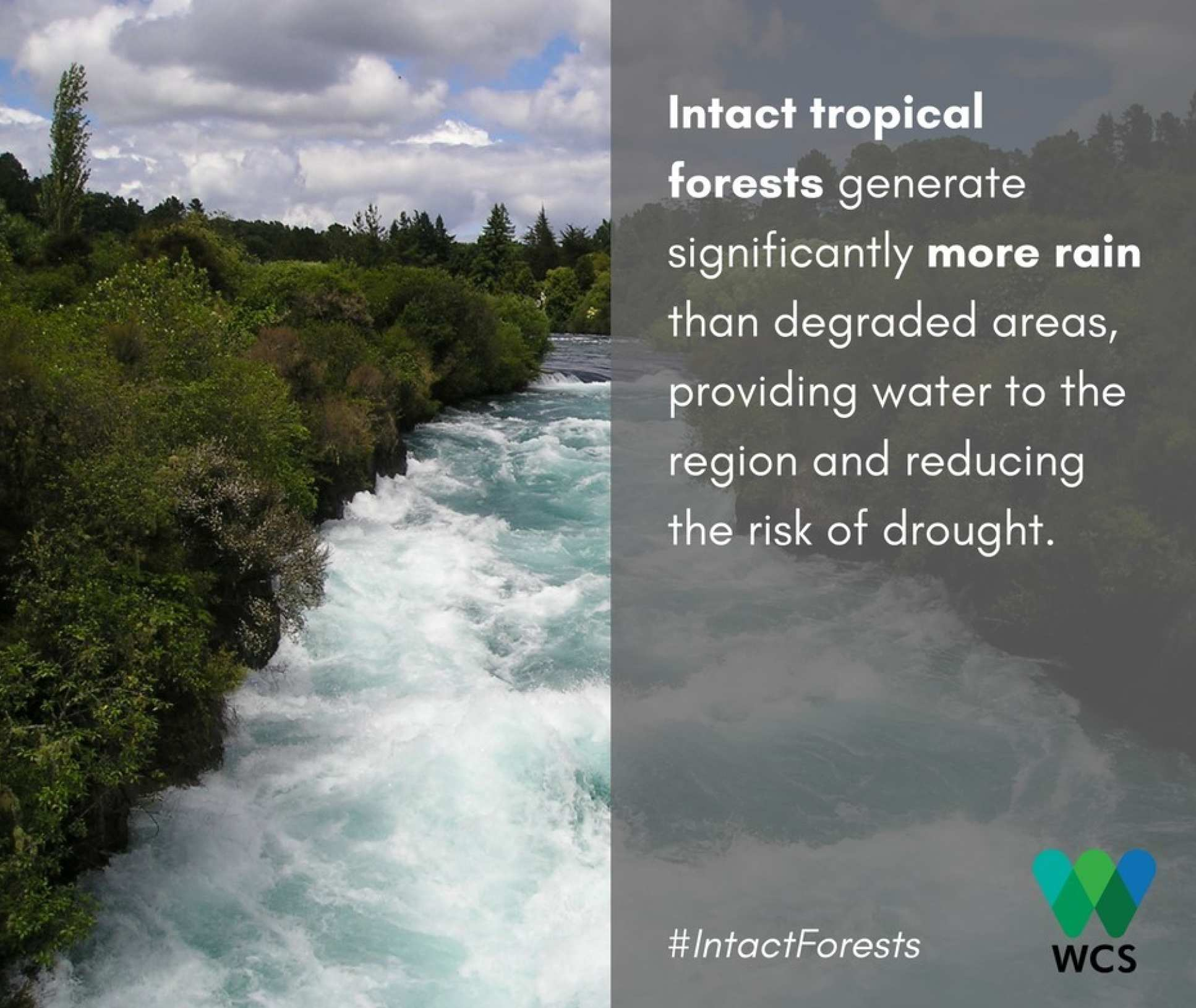 Image of a forest river with the caption: Intact tropical forests generate significantly more rain than degraded areas, providing water to the region and reducing the risk of drought.
