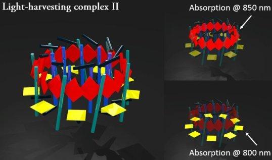 Light-harvesting_complex2