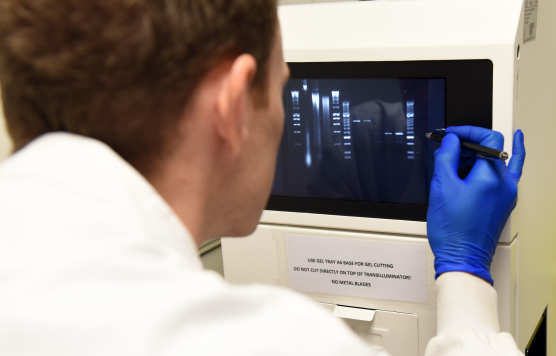 researcher looks at genome results