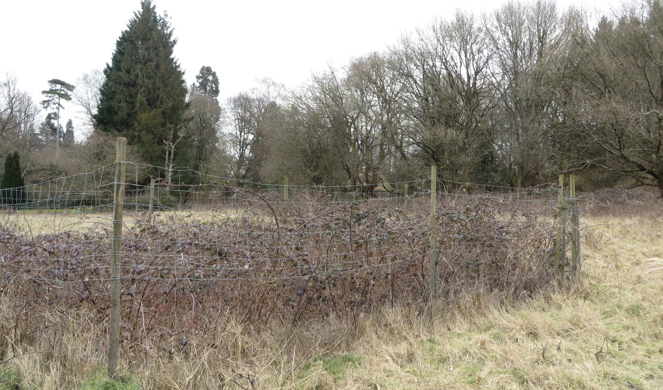 Heron's Brook fenced plot