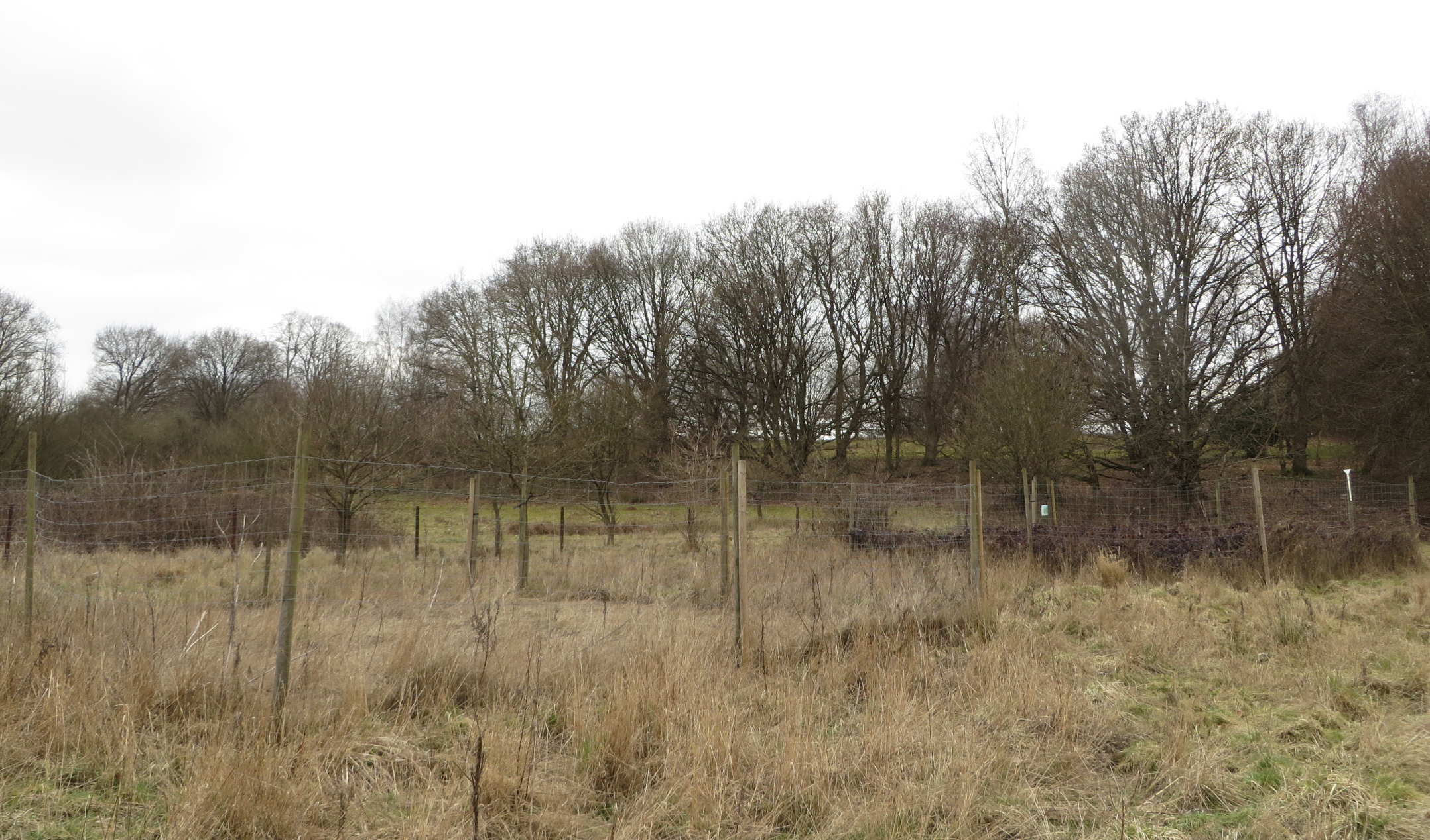 two fenced plots in Herons' brook site
