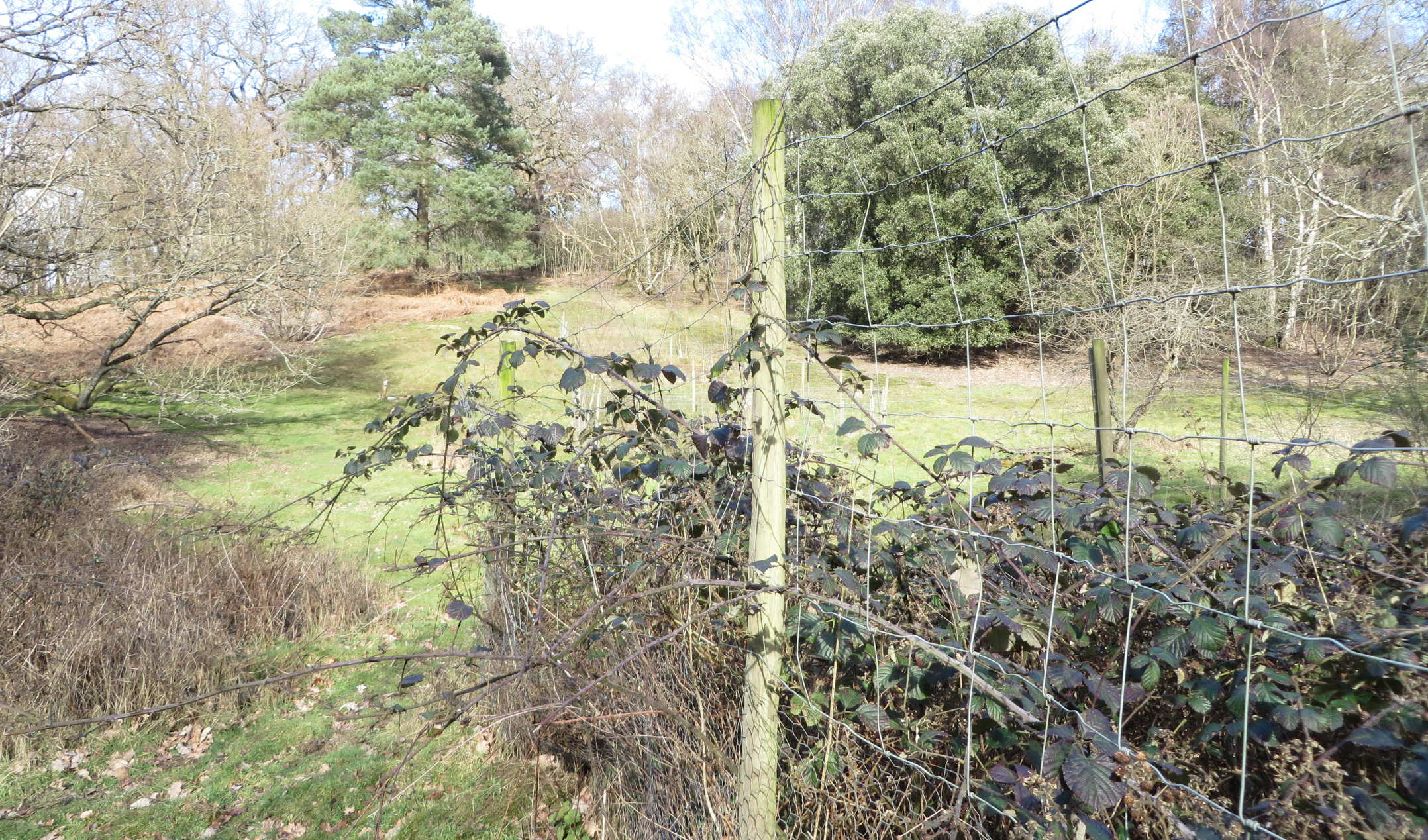 fenced plot in Rookery slope site
