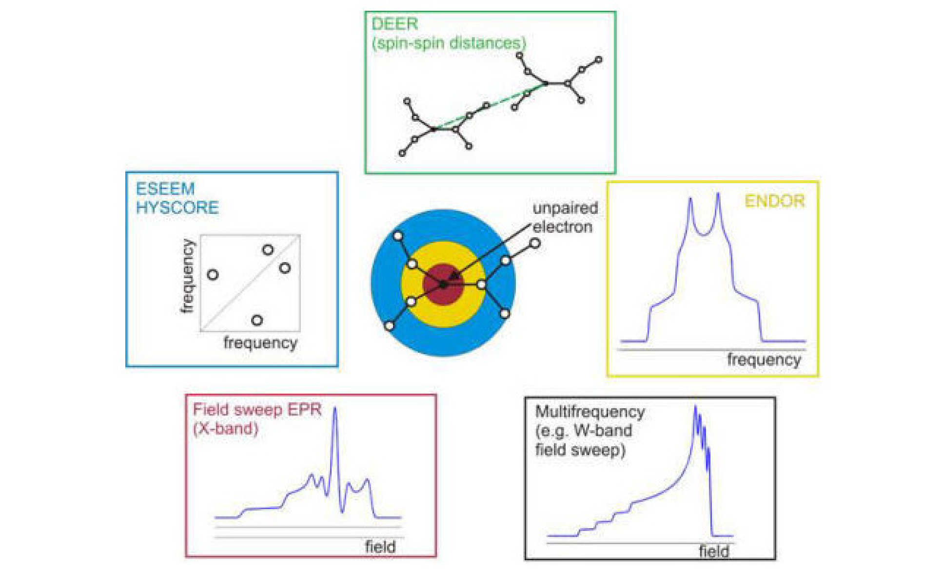 Fig. 1: Illustration of the use of EPR for structural analysis. The position of the unpaired electron is indicated by the full black circle in the fictive molecule. The coloured rings and corresponding schematic spectra indicate which parts of the molecule can approximately be studied with a particular EPR technique. Figure adapted from C. Calle et al., Chimia, 2001, 55, 763.