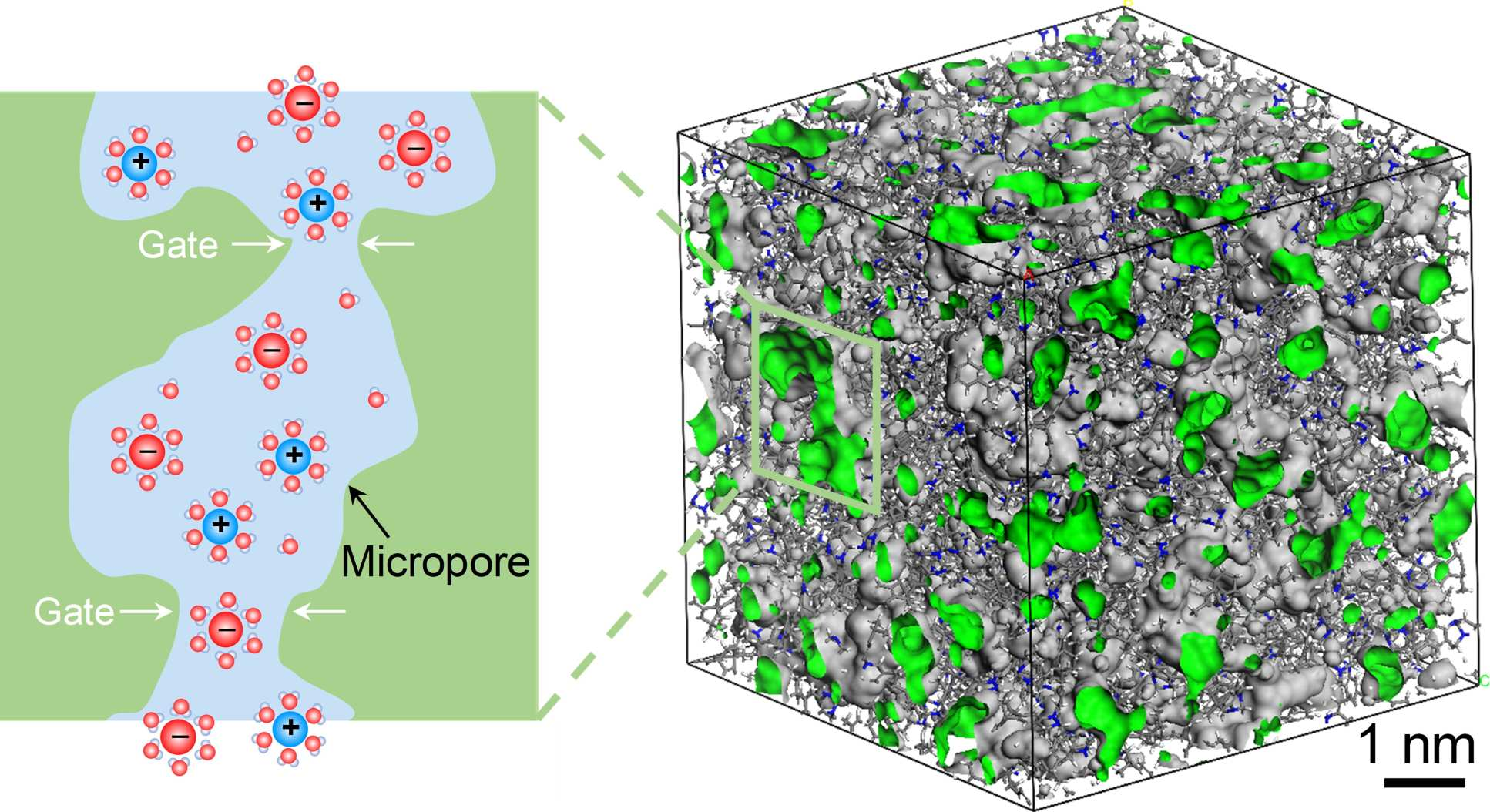 3D image of the membranes and 2D illustration that shows ions passing through 'gates' in the structure