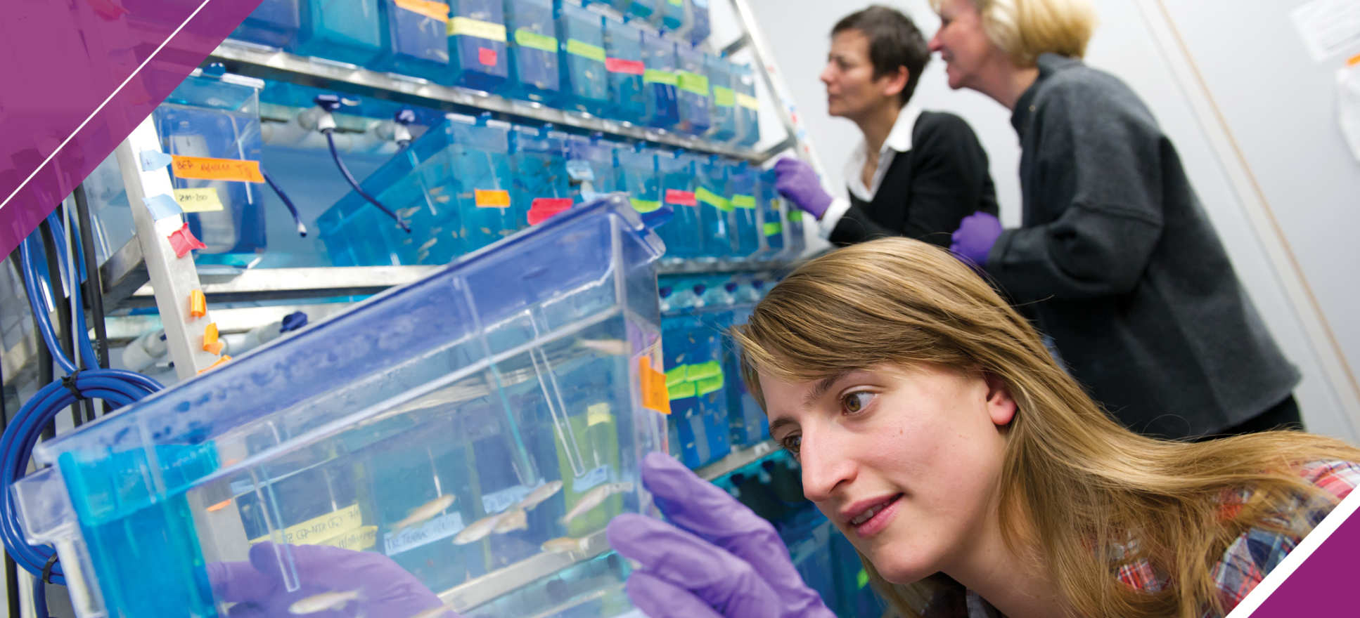 Researchers observing zebrafish