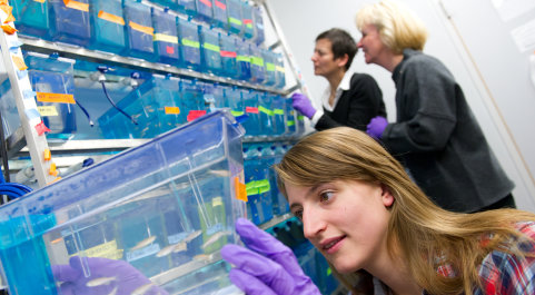 Researchers in the Dallman lab working with zebrafish
