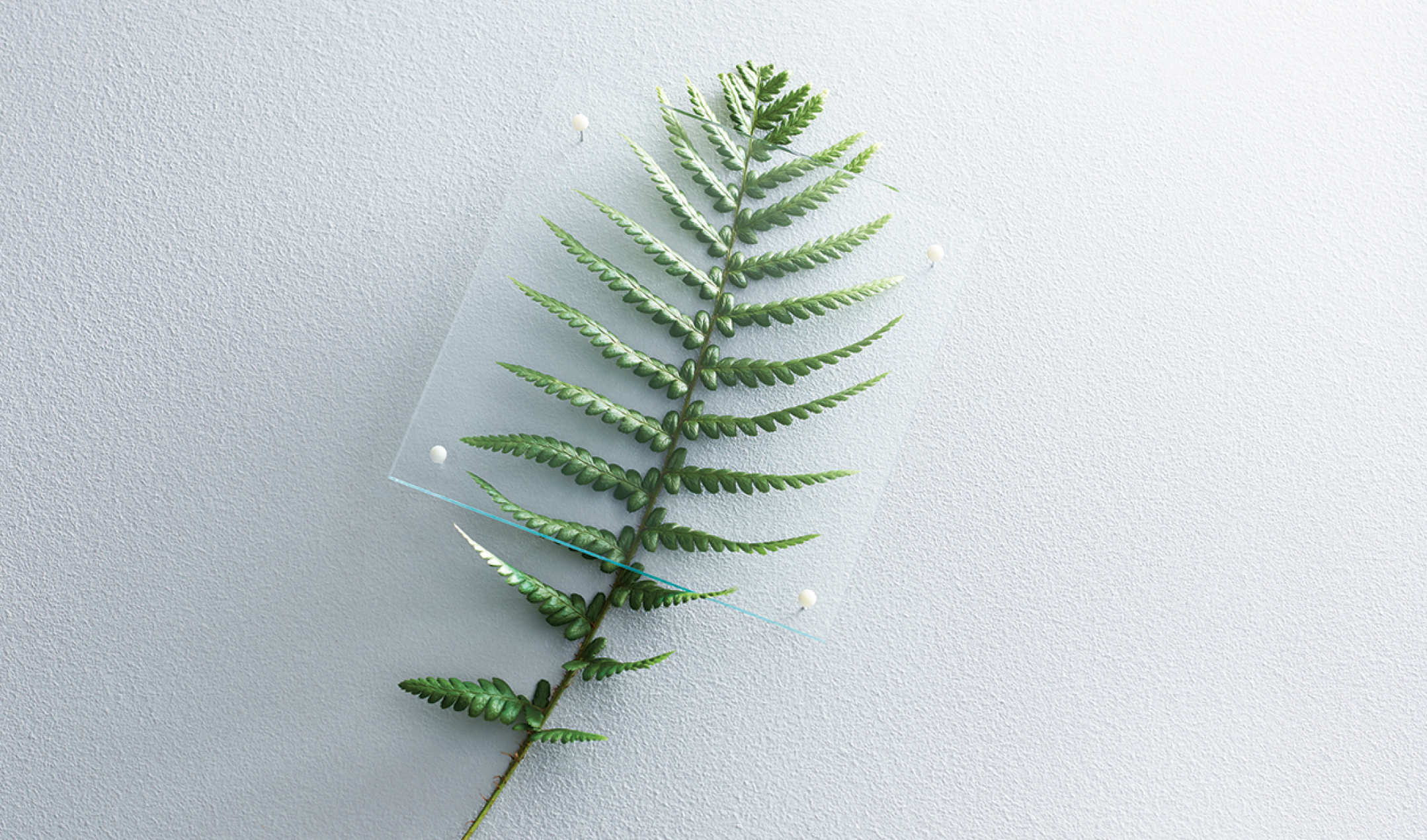 A frond from a fern under a piece of glass