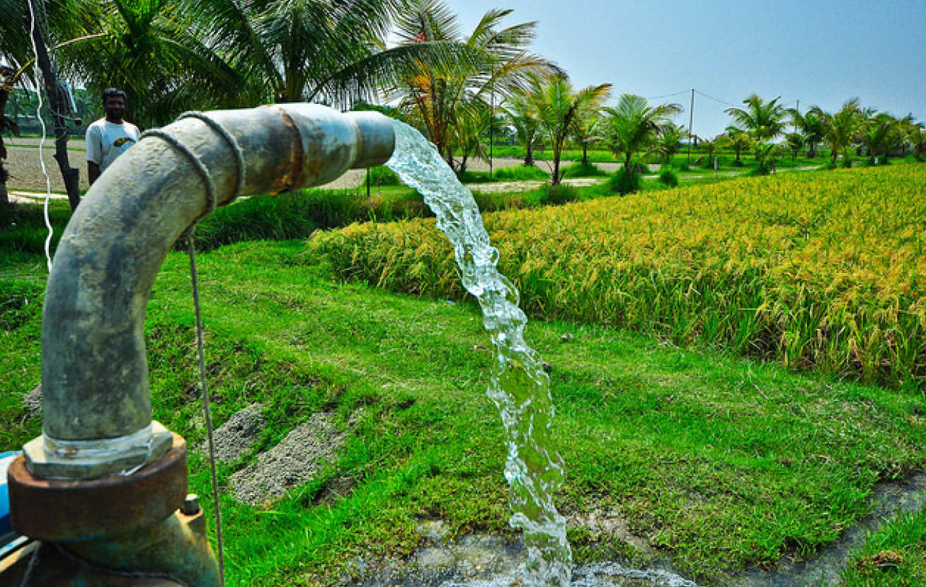 Irrigation of rice field using water pump