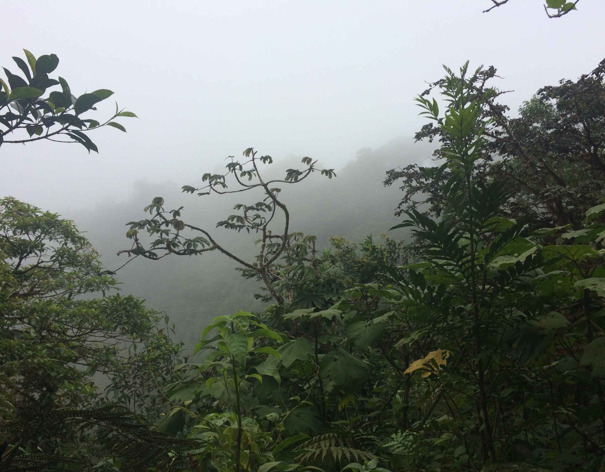A cloud forest near Monteverde, Costa Rica