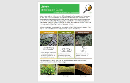air survey lichen guide