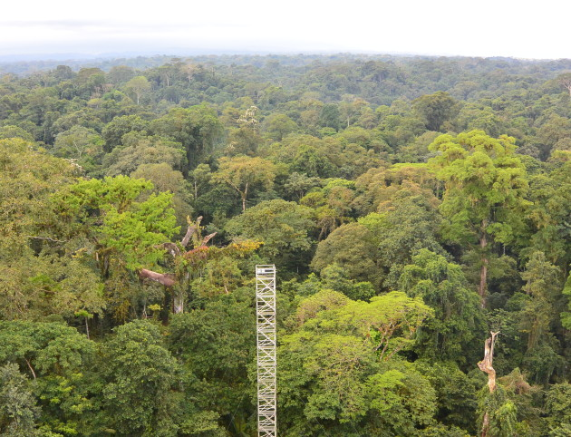 A view over the rainforest canopy at La Selva Biological Station, Costa Rica