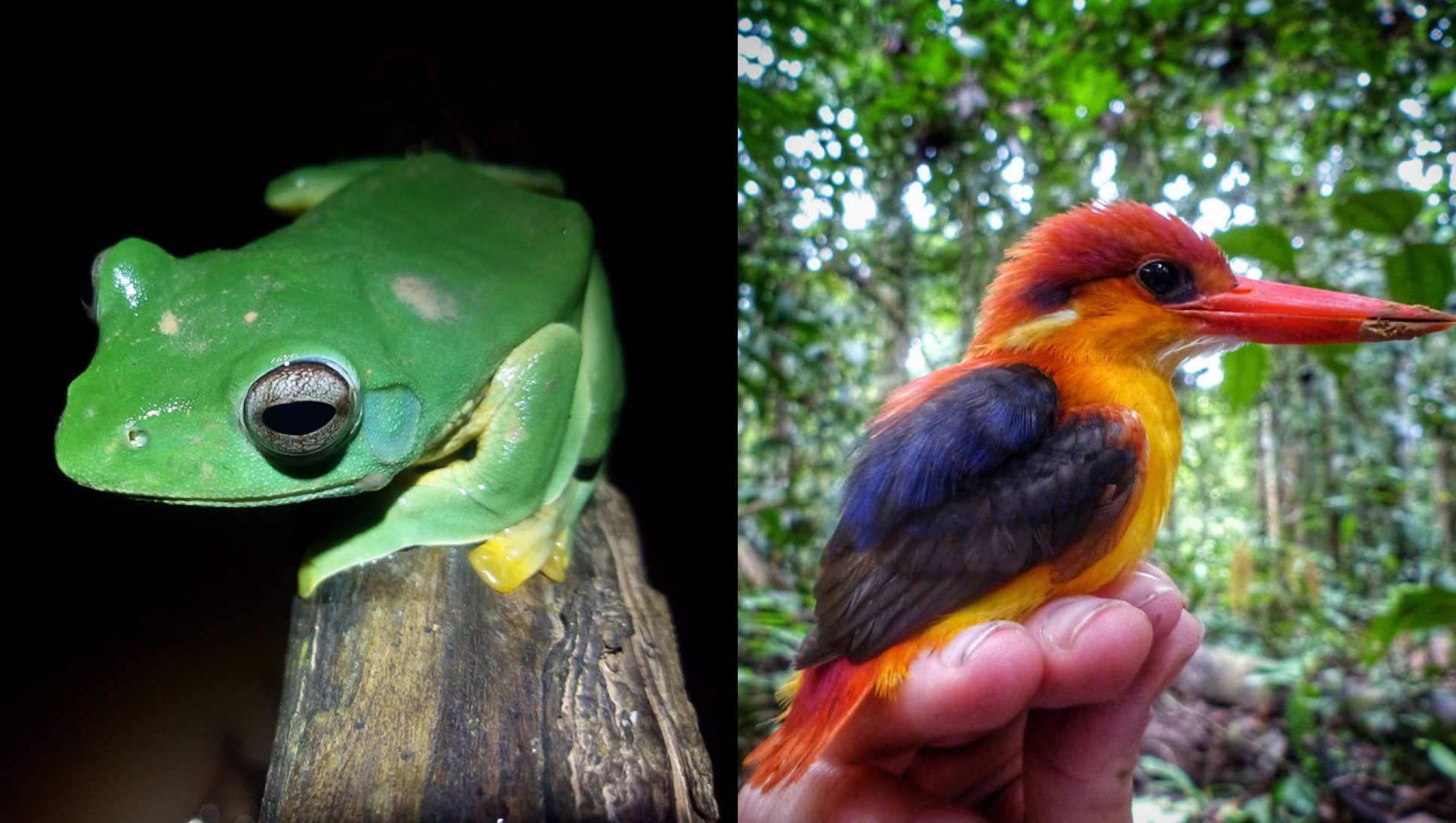 A frog and a bird