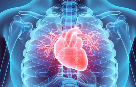 A graphic illustration of a heart