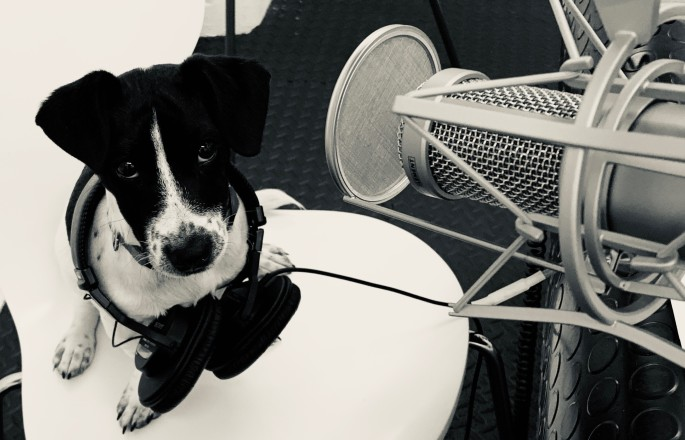 Puppy with headphones round his neck underneath a microphone in a recording studio