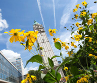 Queen's Tower at Imperial's South Kensington Campus with yellow flower in the foreground