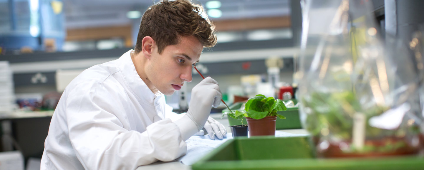 Bsc Biochemistry With Research Abroad Study Imperial College London