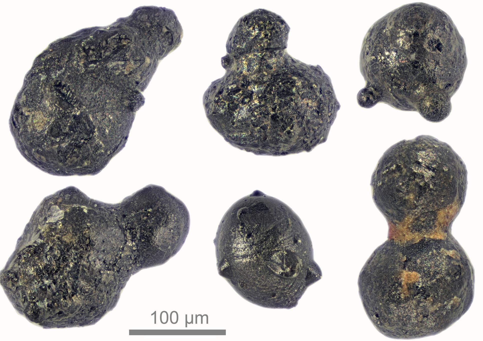 Photo of six micrometeorites up close, measuring around 200 micrometres across