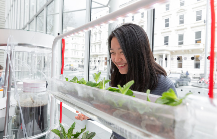 Girl looking at plants growing in a horizontal tube