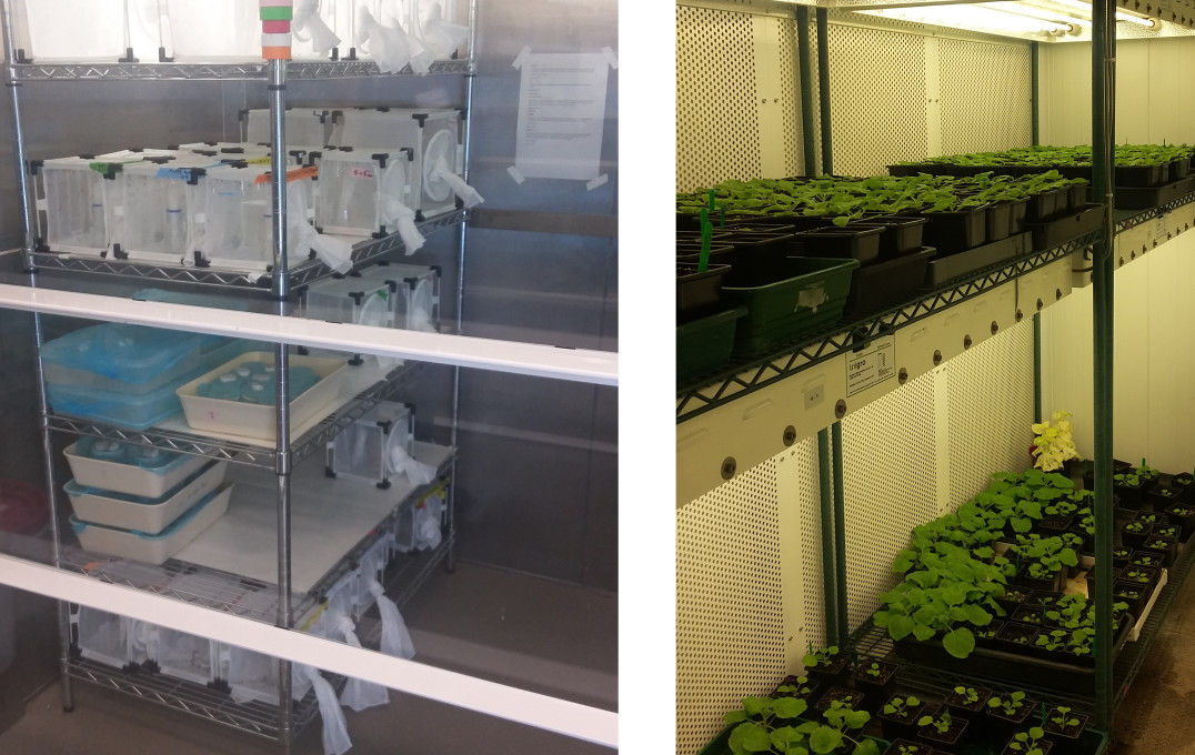 Insectary (left) and plant growth room (right) on Imperial's South Kensington campus