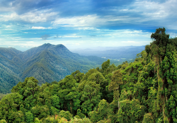 forests need for conservation Community managed forests and forest  of their conservation effectiveness across  there are at least three research findings that argue for the need.