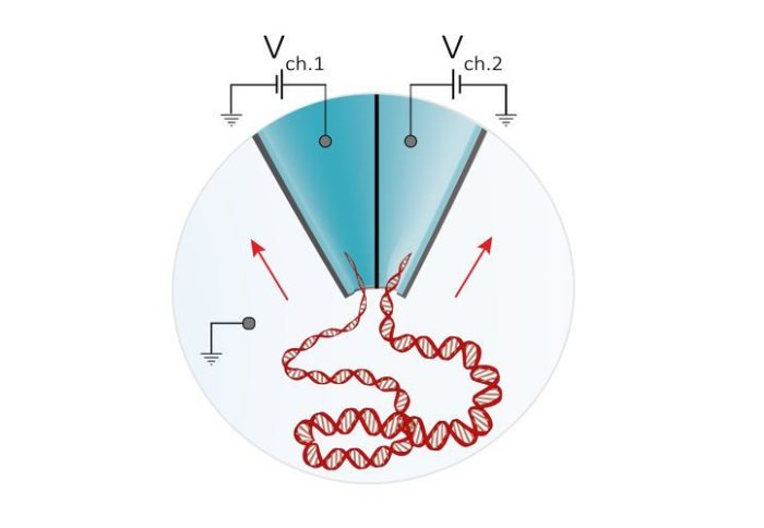 Illustration of a stand of DNA being pulled into two different needle-tip holes