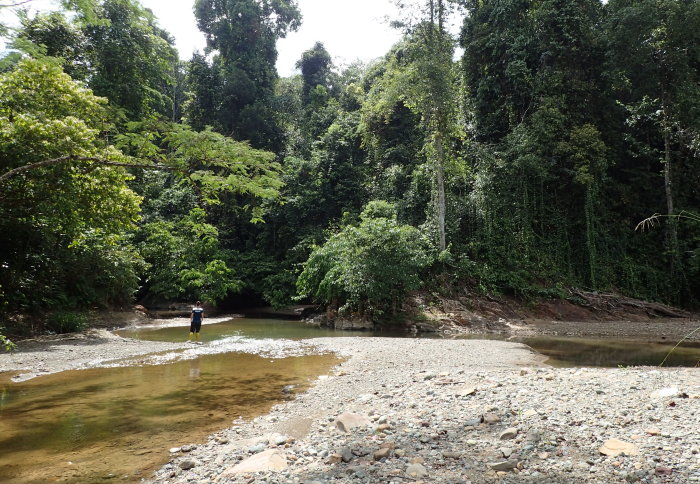 A wide shallow stream in a rainforest