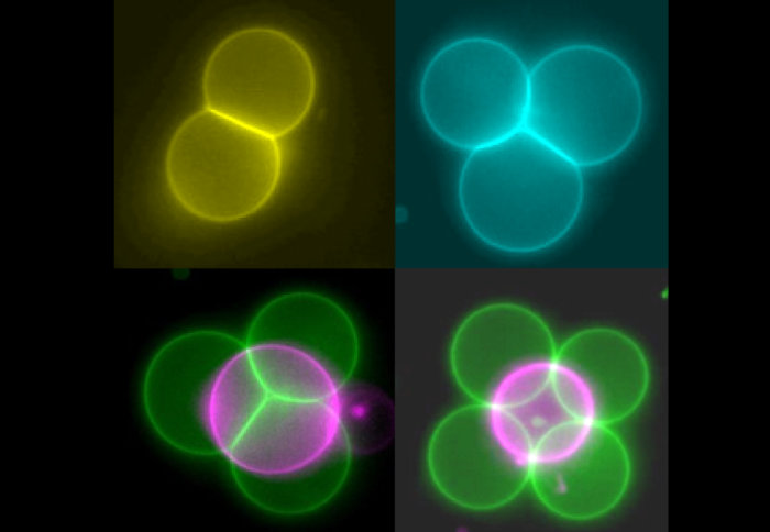 Colourful circles arranged in various patterns