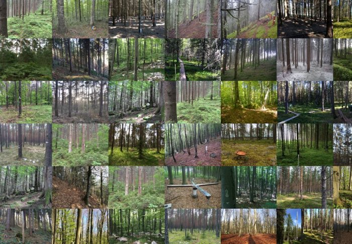 A composite image of many forests sites being sampled