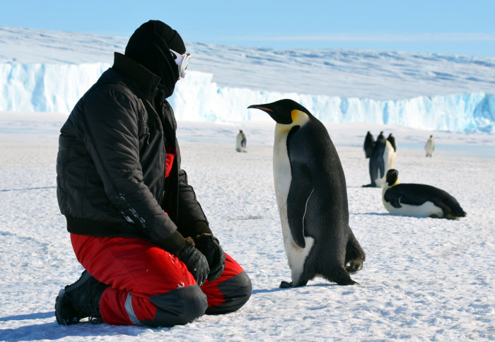 Man kneeling on the ice looking at a pengiun