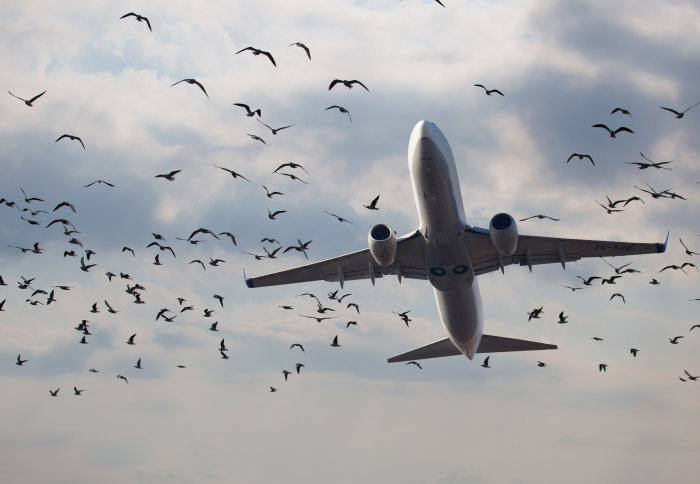 Birds flocking around an aeroplane