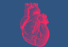 Antibodies may cut heart attack risk