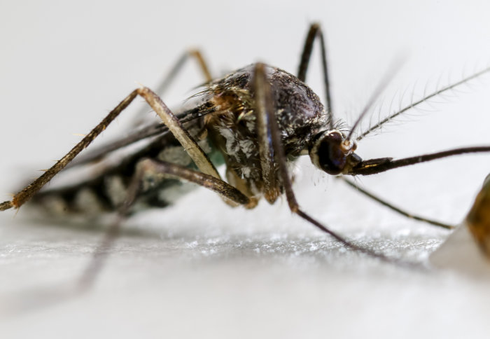 Mosquitoes that can carry malaria eliminated in lab experiments