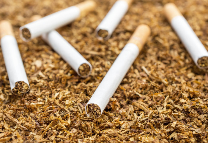 Cigarettes on a background of cut tobacco